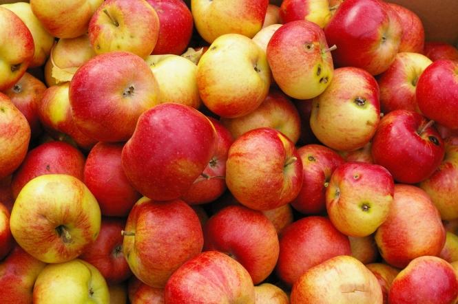 SFR Apples